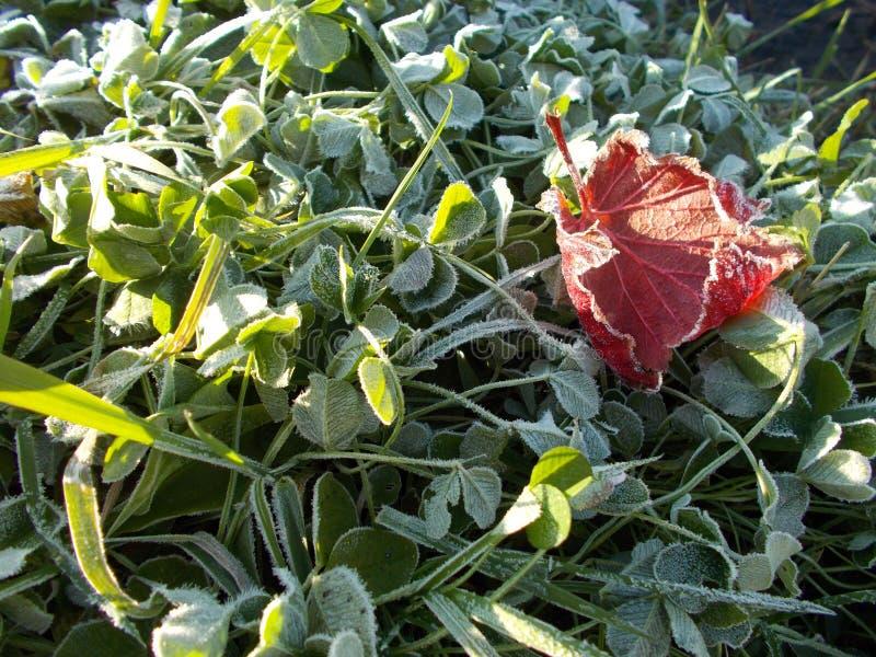 Herbst Eisiger Morgen  stockfoto