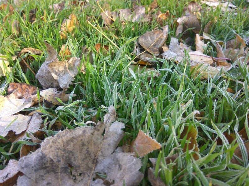 Herbst Erster Frost stockfoto