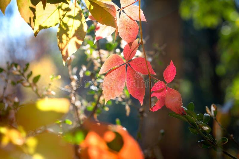 Herbst fängt an, deutet im Herbst - Herbstlaub an lizenzfreie stockfotos