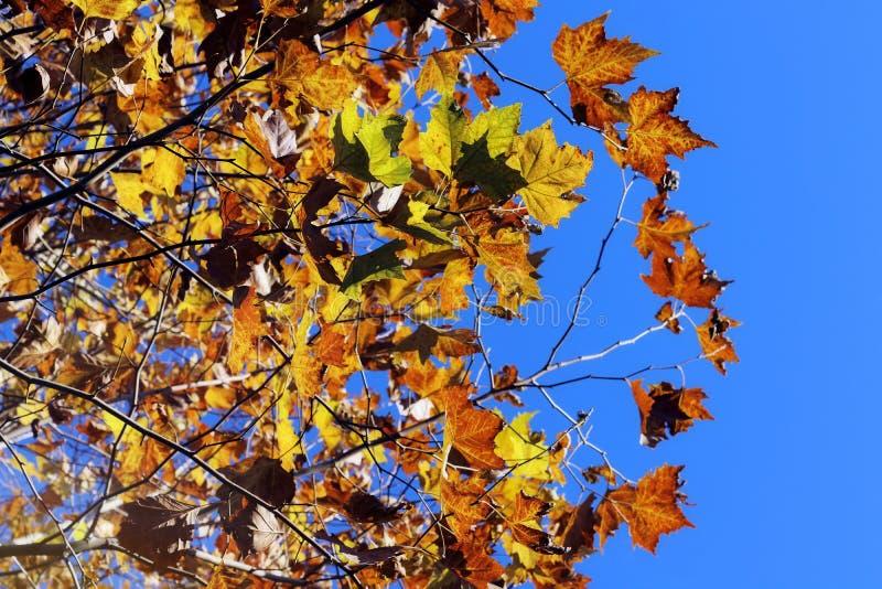 Herbst färbt Blattlaub Fallhintergrund Frankreich lizenzfreie stockfotografie