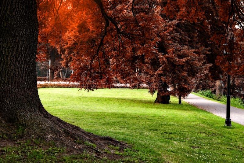 Herbst färbt Stadtpark stockbilder