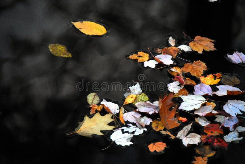 Herbst-FALL bunte Blätter, die auf einen dunklen See schwimmen lizenzfreie stockfotos