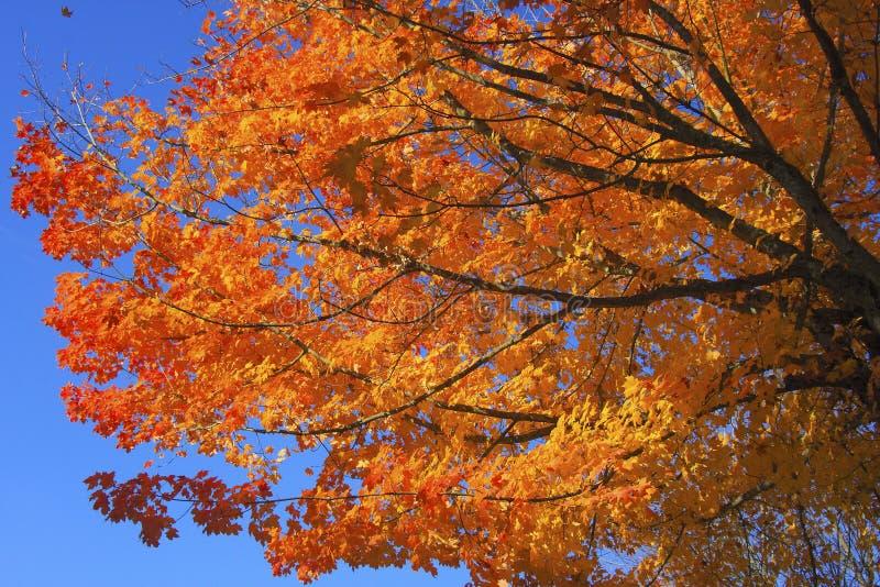 Herbst-Fall-Farben lizenzfreie stockfotografie
