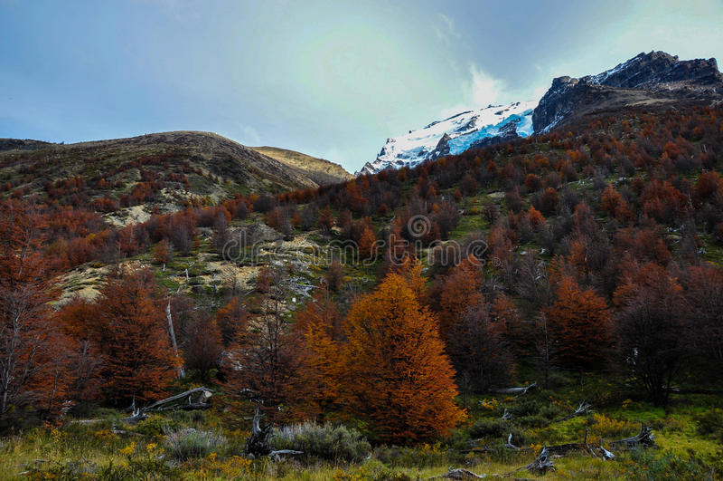 Herbst/Fall in Parque Nacional Torres Del Paine, Chile lizenzfreies stockfoto