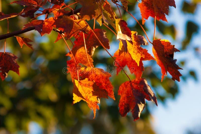 Herbst-Fallen Blätter stockfotografie