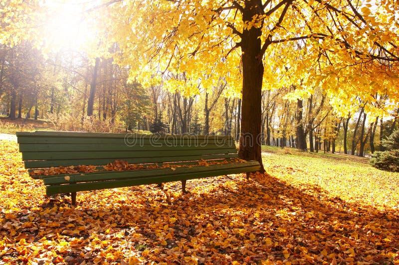 Herbst, Fallhintergrund lizenzfreies stockbild