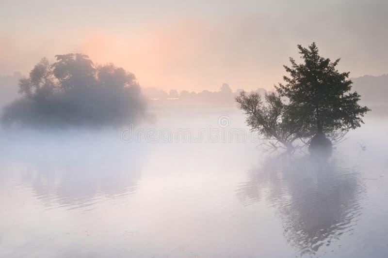 Herbst-Falllandschaft über nebeligem nebelhaftem See lizenzfreies stockbild