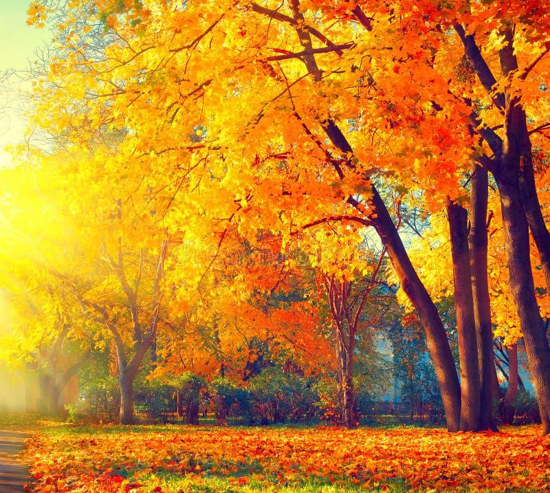 Herbst Fallnaturszene Herbstlicher Park lizenzfreie stockfotos