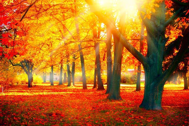Herbst Fallnaturszene Herbstlicher Park lizenzfreie stockfotografie