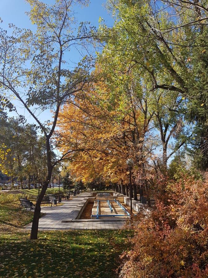 Herbst Fallnaturszene Schöner herbstlicher Park lizenzfreie stockbilder