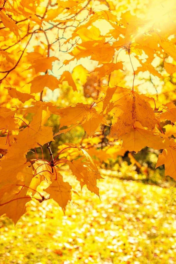 Herbst Fallszene mit fallenden Blättern Schöner herbstlicher Park lizenzfreie stockfotos