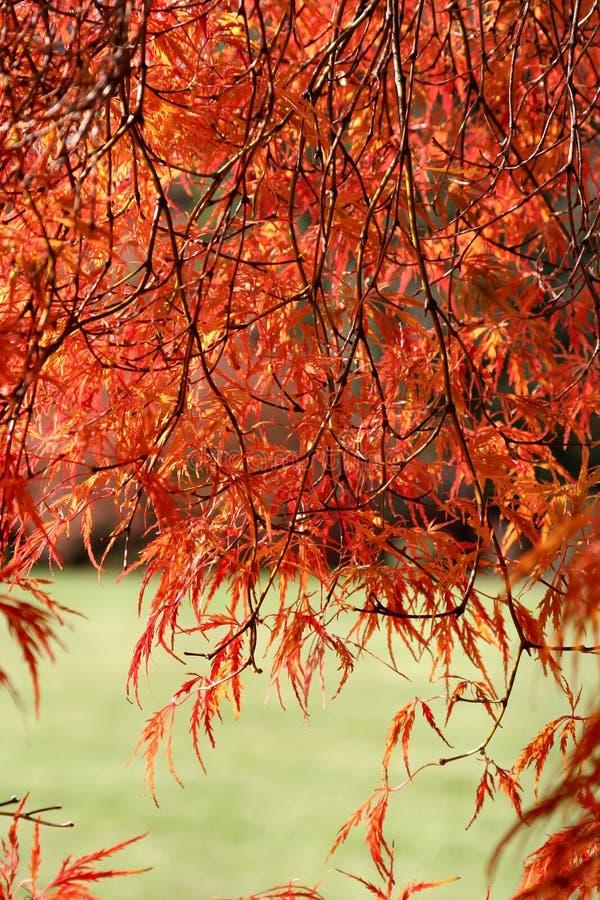 Herbst-Farben stockbild