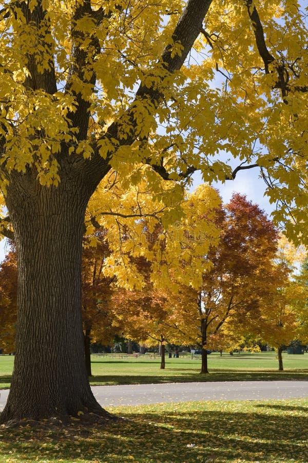 Herbst-Farben stockfoto