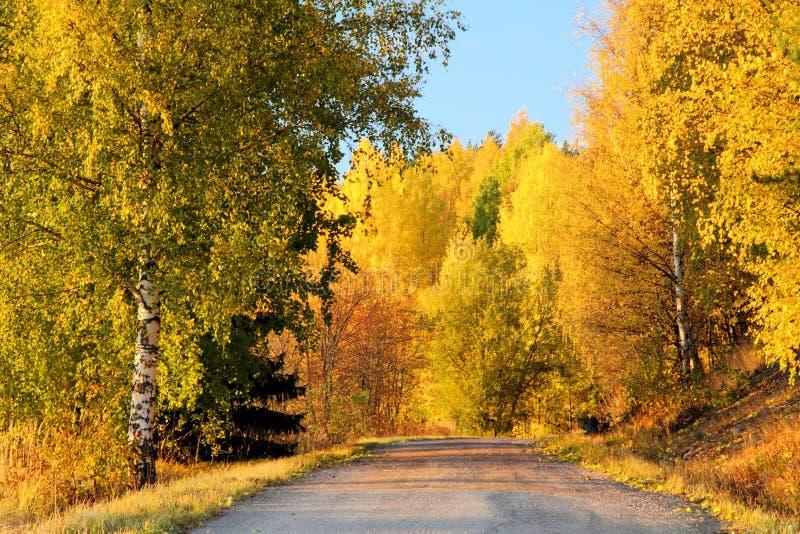 Herbst-Farben in Finnland 1 lizenzfreies stockfoto