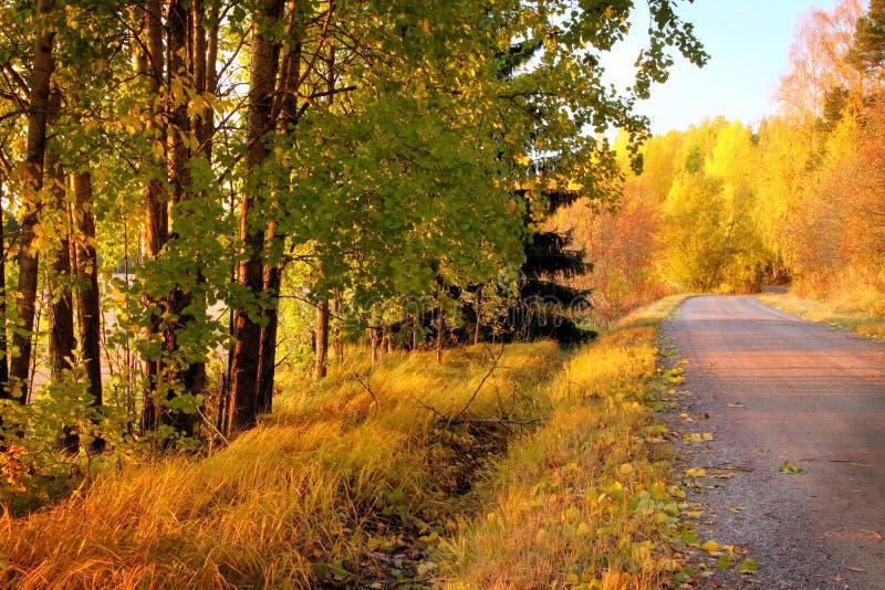 Herbst-Farben in Finnland 4 lizenzfreies stockfoto