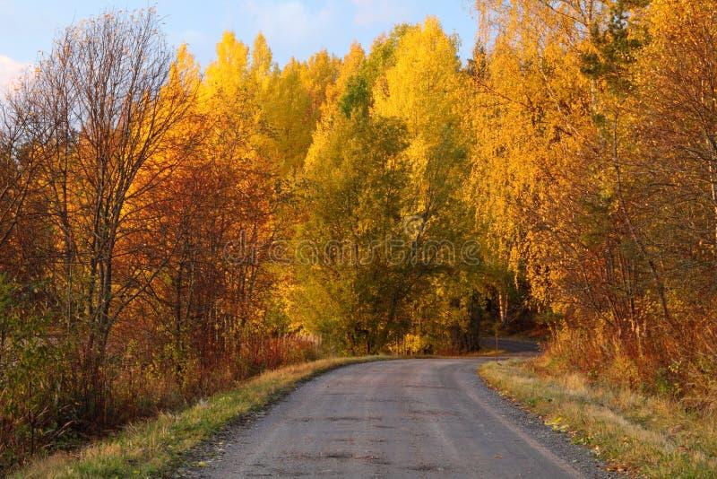 Herbst-Farben in Finnland 5 stockbild