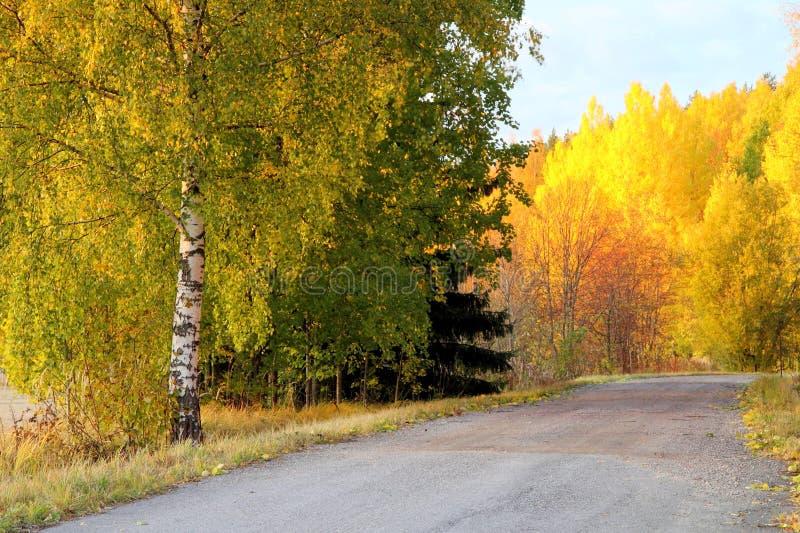 Herbst-Farben in Finnland 6 stockbild