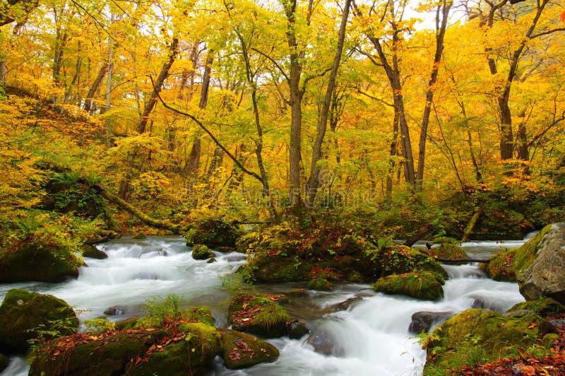 Herbst-Farben von Oirase Fluss lizenzfreies stockfoto