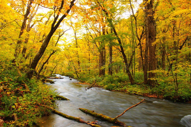 Herbst-Farben von Oirase Fluss lizenzfreie stockbilder