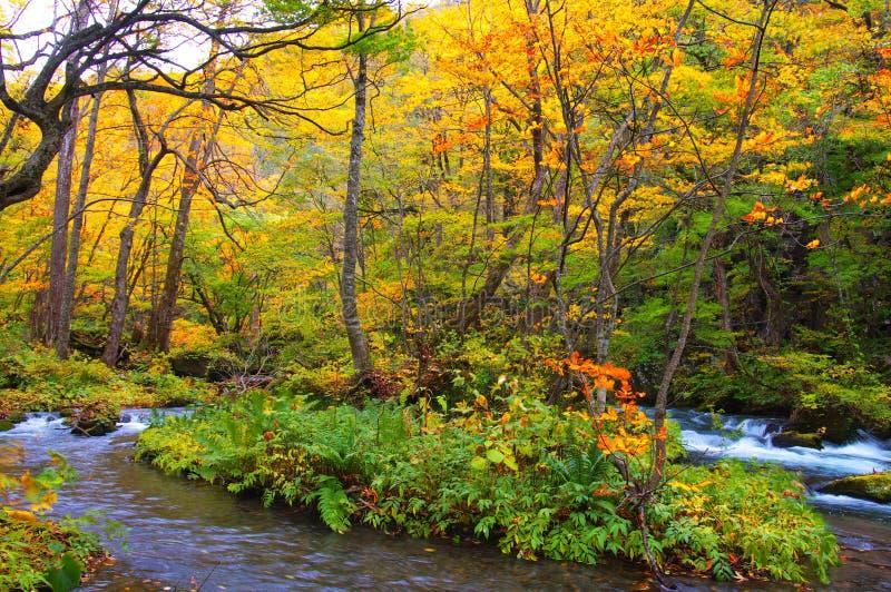 Herbst-Farben von Oirase Fluss stockfotografie