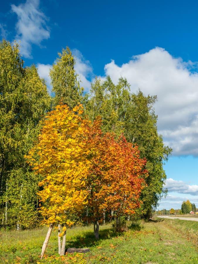 Herbst-farbige B?ume lizenzfreie stockbilder