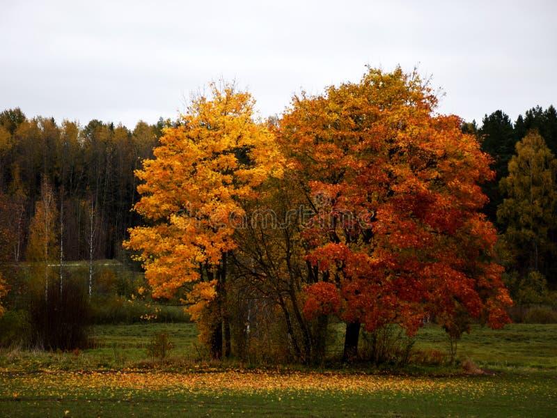 Herbst-farbige B?ume stockbilder