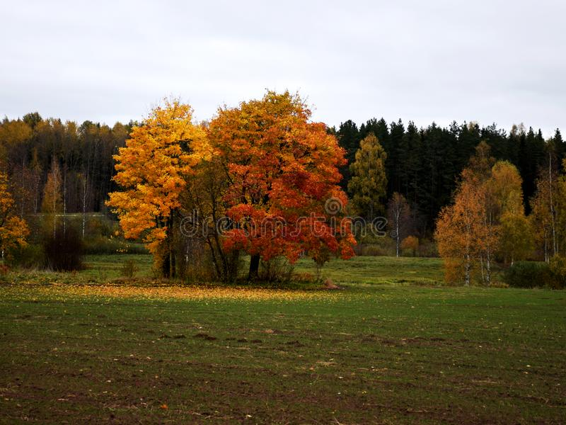 Herbst-farbige B?ume stockfotografie