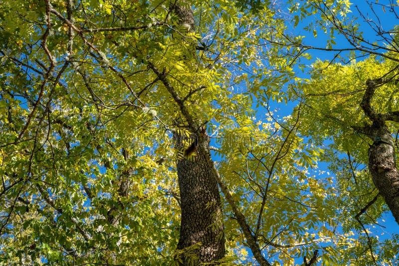 Herbst farbige Blätter gegen einen blauen Himmel lizenzfreie stockfotografie