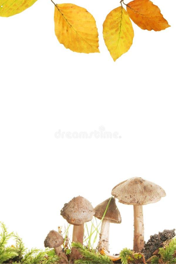 Herbst-Feld lizenzfreies stockfoto