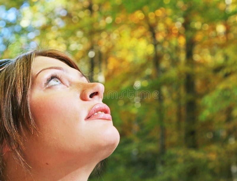 Herbst forestn Portrait stockfoto