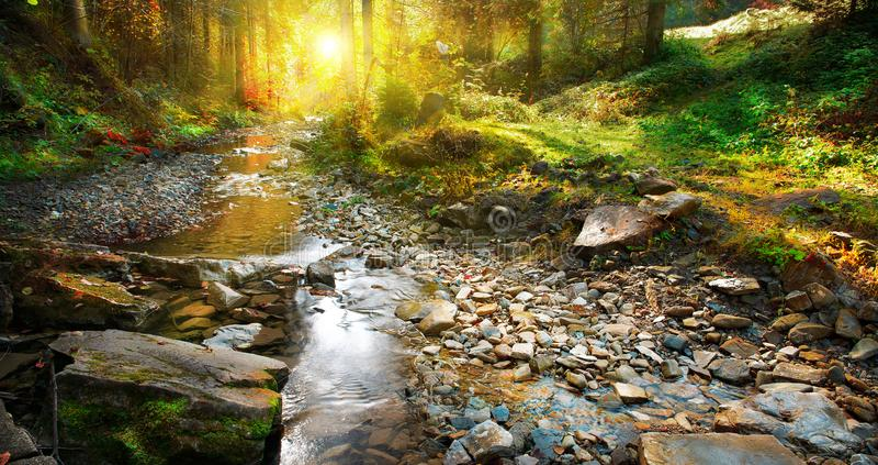 Herbst Gebirgsfrühling, Waldlandschaft stockbilder