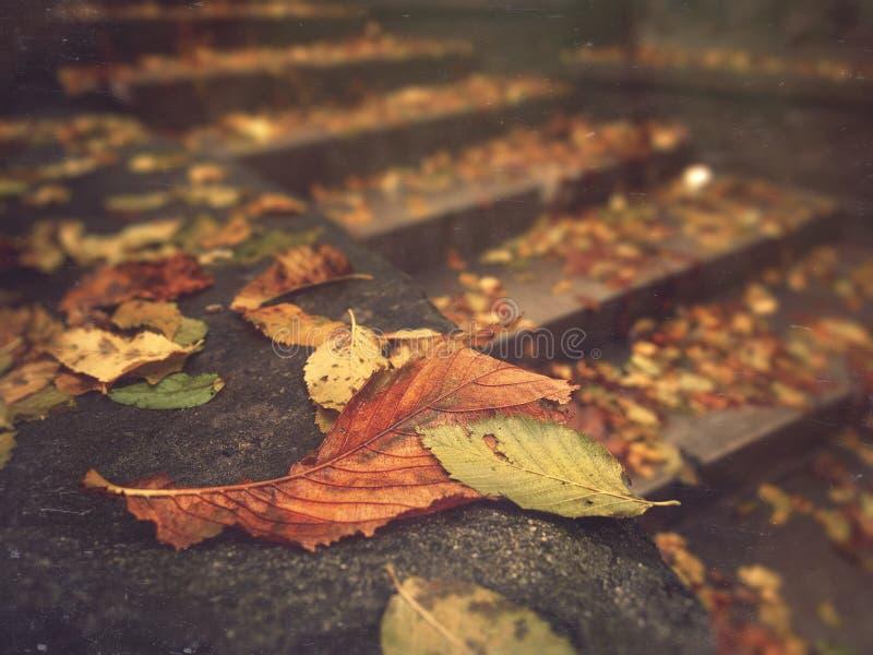 Herbst Gefallene Blätter auf Treppenhaus lizenzfreies stockfoto