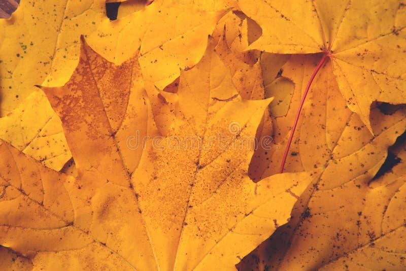 Herbst gefallener Gelb- und Orangenblatthintergrund lizenzfreies stockbild