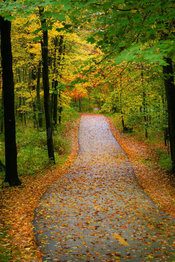 Herbst-Gehweg stockfotos
