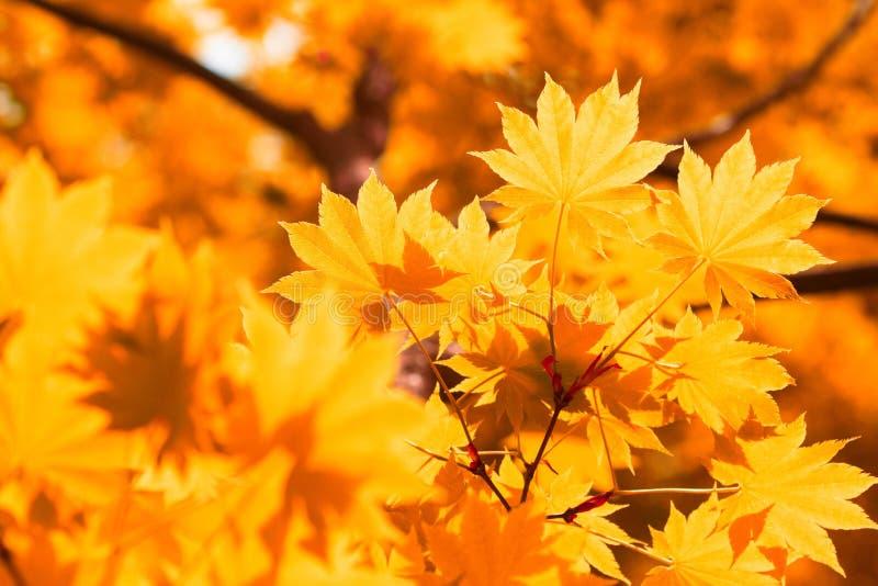 Herbst, Gelbblätter stockfotografie