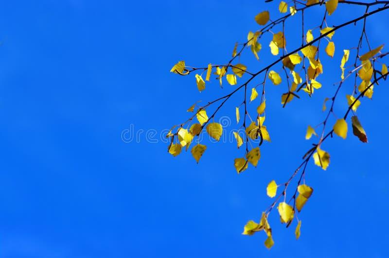 Herbst. Gelbblätter lizenzfreie stockfotos