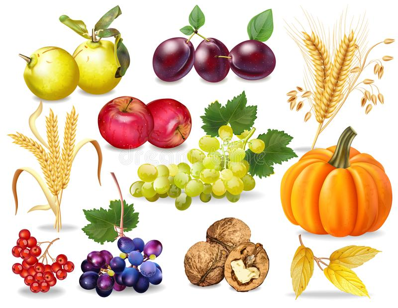 Herbst-gesetzter Vektor realistisch Kürbis, Weizen, Trauben, Wein, Walnüsse, Trauben Ausführliches Design 3d Dunkle Hintergründe vektor abbildung