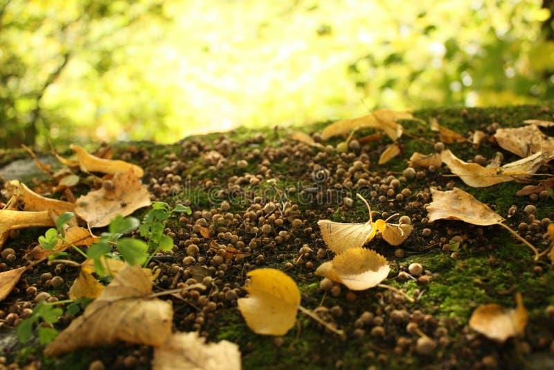Herbst-Goldblätter lizenzfreies stockbild