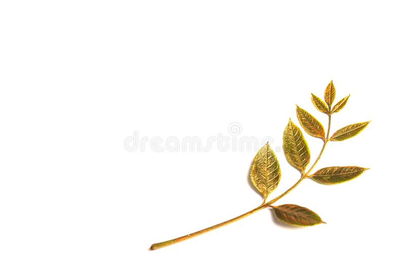 Herbst-goldenes Blatt mit Kopienraum lizenzfreie stockbilder