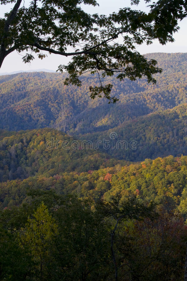 Herbst, große rauchige Berge NP lizenzfreie stockfotos
