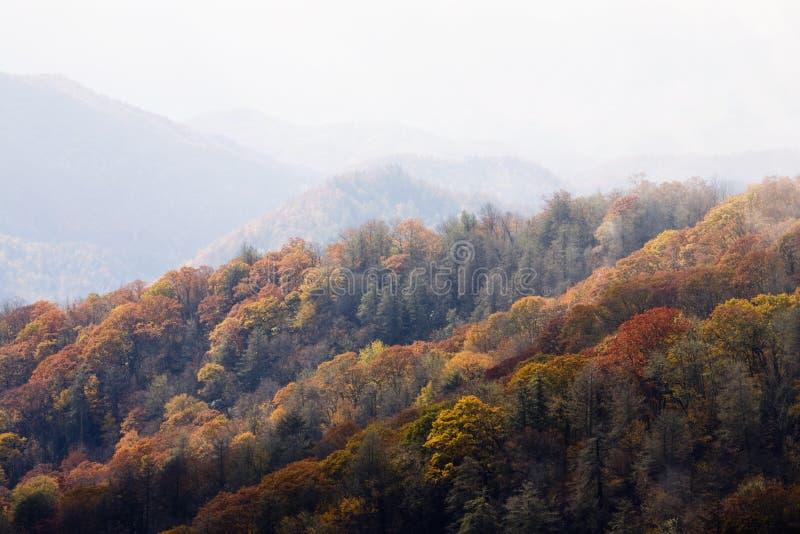 Herbst, große rauchige Berge NP stockbilder