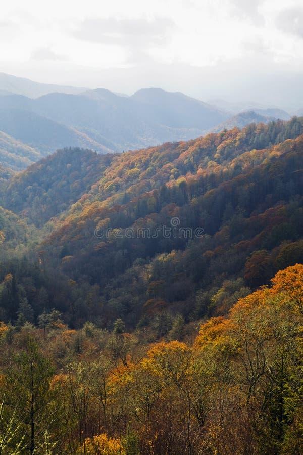 Herbst, große rauchige Berge NP lizenzfreie stockfotografie
