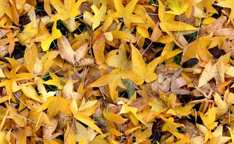 Herbst Groundcovering (nahtlos) stockfotos