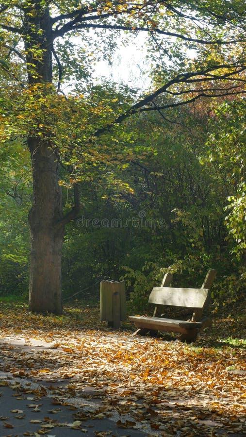 Herbst im 'Pszczelnik 'eine Holzbank auf der Hauptpromenadengasse lizenzfreies stockbild