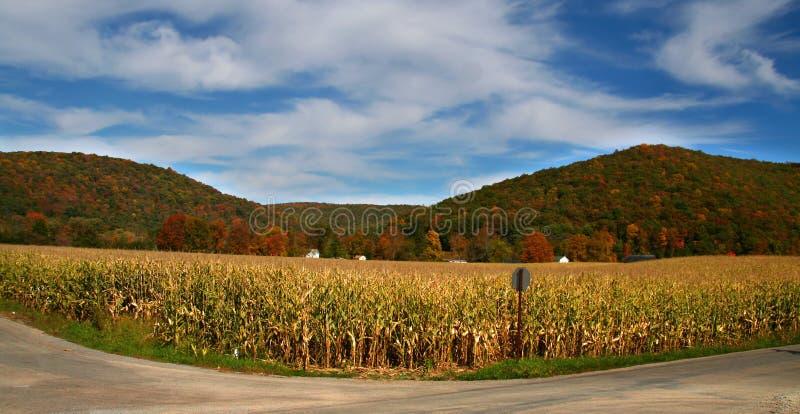 Herbst im Allegheny Wald stockfotografie