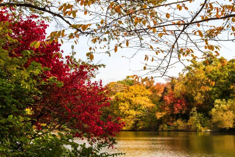 Herbst im Central Park lizenzfreies stockfoto