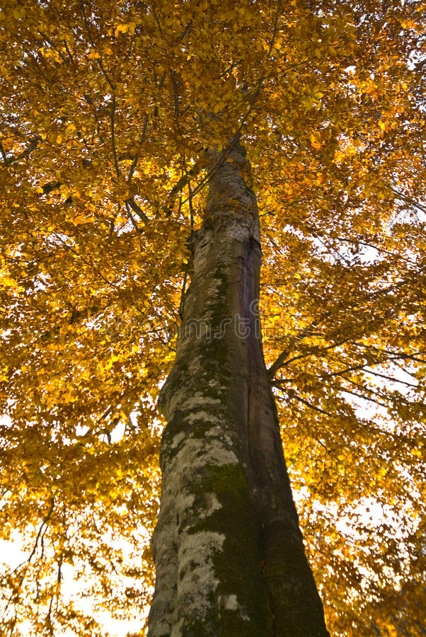 Herbst im Foresta-Schatten, Gargano, Italien lizenzfreie stockbilder