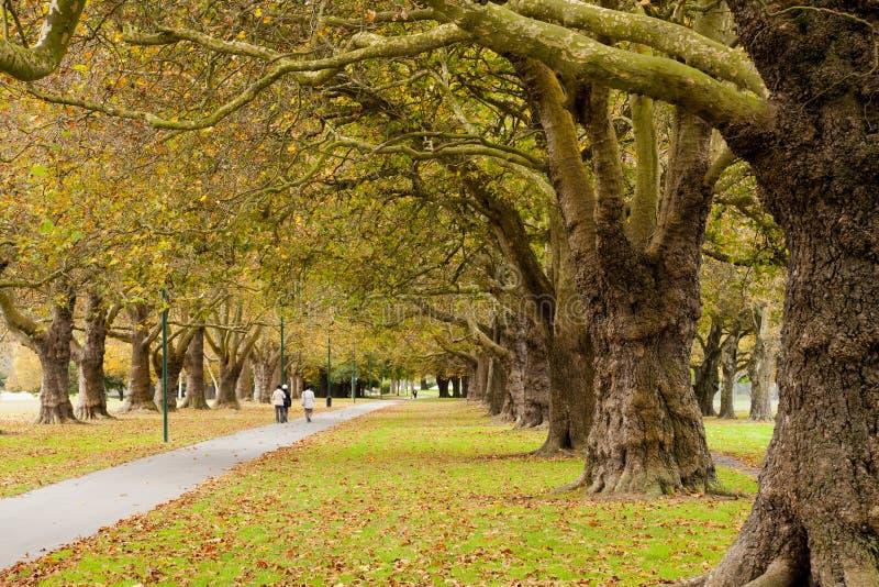 Herbst im Hagley Park, Christchurch, Neuseeland stockbild
