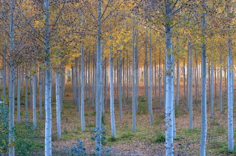 Herbst im Holz lizenzfreie stockbilder