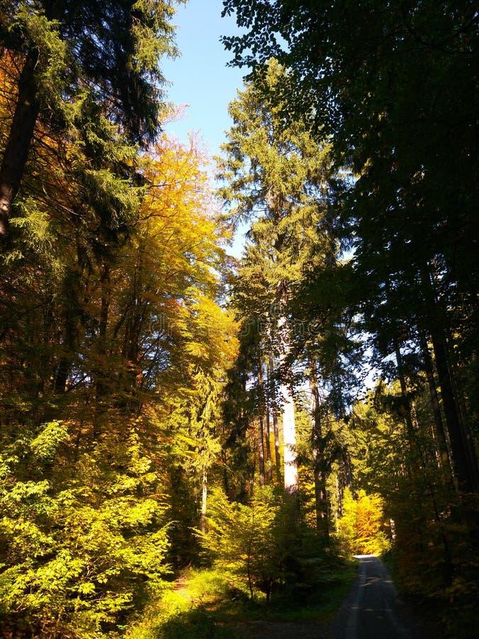 Herbst im Holz nahe Frankfurt stockbild